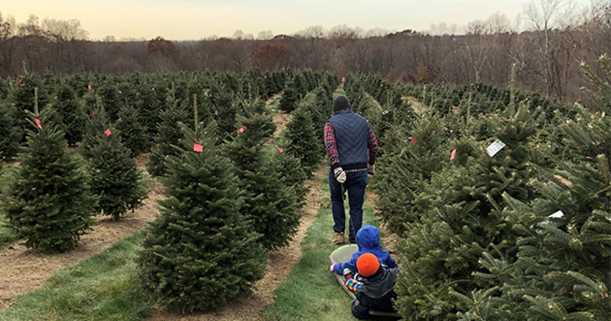 Cut-Your-Own Christmas Tree in Lancaster, PA | Discover ...